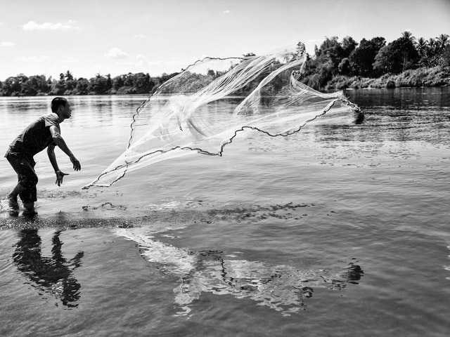 Monet kalakannat ovat vaarassa